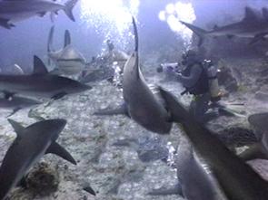 Patxi Sharks